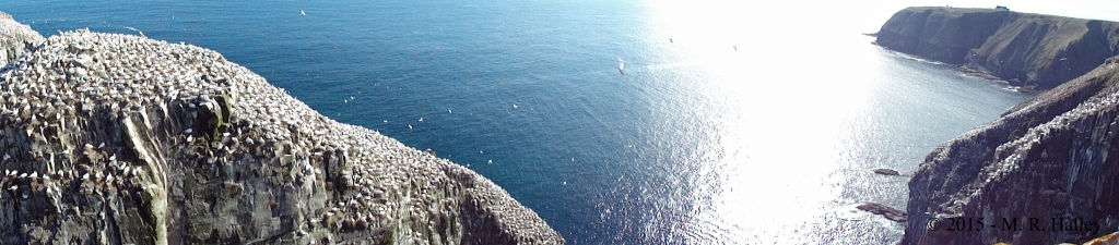 CapeStMarys_Gannets